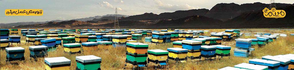 زنبورستان عسل میثم